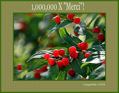 "1,000,000 x ""Merci!"" Thank you! (1, 000, 467 views) (Huguette T.) Tags: fruits chvrefeuille honeysuckle"