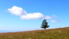 Belchen (Joanbrebo) Tags: naturaleza nature paisaje paisatge landscape cloud nuages nube nvol arbol arbre tree germany schwarzwald belchen eosd canoneos80d efs1855mmf3556isstm autofocus