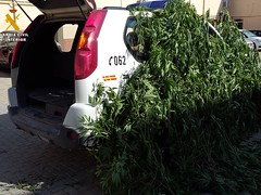 Aprehensin Marihuana en Caspe (guardiacivilzaragoza) Tags: dorgas marihuana caspe