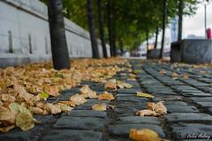 Dublin 27 August 16 7 (Helen Mulvey) Tags: dublin ireland summer leaves trees depthoffield cobblestones outdoor urban