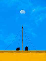 Moon dance (1jonathan1) Tags: cartagena cartagenadeindias moon bird nature zoom sky cloud animals building blue yellow old town city