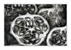 Kiwano Melon, Howell, MI (Vincent Galassi) Tags: kiwanomelon howell mi fruit blackened white fine art