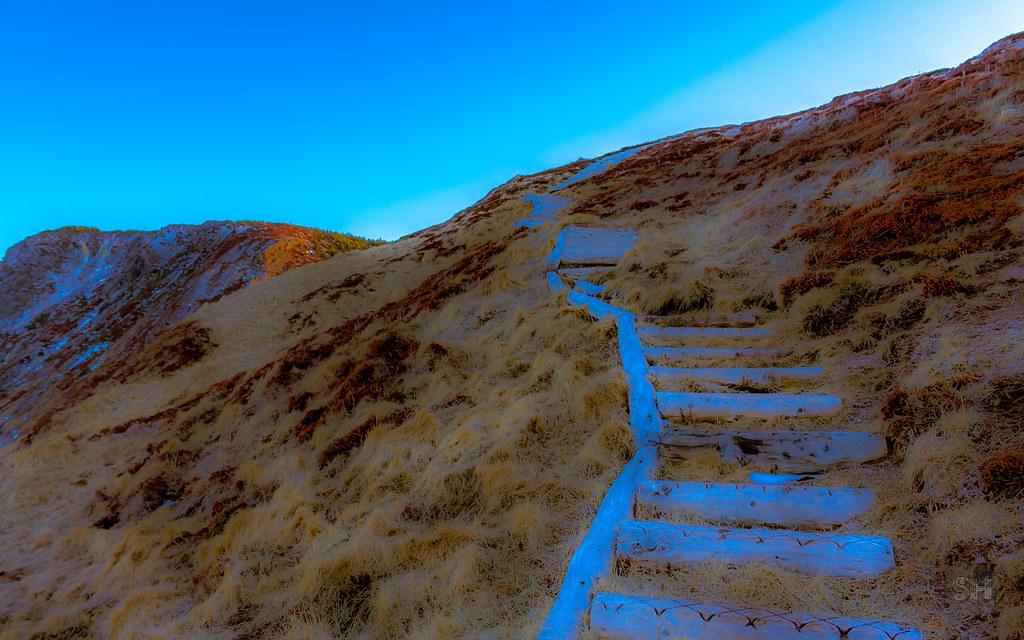 East Coast Stairs (skylarhodder) Tags: East Coast Stairs Ect Trail Avalon  Newfoundland