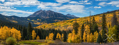 Colorado Gold at Kebler Pass (Mike Ver Sprill - Milky Way Mike) Tags: colorado gold kebler pass crested butte ohio road route 12 highway panorama pano panoramic mike ver sprill michael versprill milky way nikon d800 trees tree mountain mountains travel explore roadtrip landscape fallfoliage autumn seasonschanging september2016 amazing gorgeous wideangle green greatphotography best bluesky clouds nature peter lik style 85mm 18g