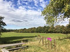 Vrouw en paard (Dimormar!) Tags: landscha landscape paard hors vrouw woman weiland autumn welhoeksedijk roze pink picknicktafel