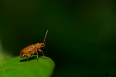 Little beetle .. (Jams Nabil) Tags: flickr explore ngc photography wide world nature animals canon bangladesh beauty photographers naturallight shoot close closeup