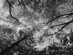 iph501 (gzammarchi) Tags: italia paesaggio natura montagna forli sanbenedettoinalpe acquacheta bosco albero inalto bn