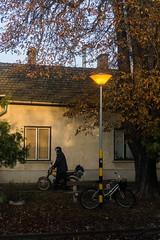 _DSC5952 (BKscape) Tags: autumn bicycle dawn pad padok vonat