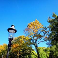 Fall in @riversideillinois 🍂🍁🌾 (riverside.illinois) Tags: instagramapp square squareformat iphoneography uploaded:by=instagram riverside riversideillinois chicago chicagosuburbs fall suburbs 2016