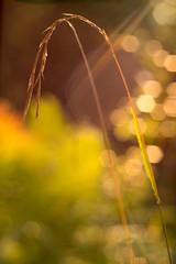 Light flow (Peter Zabukovnik) Tags: flare