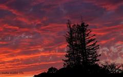 10-2-16 (10) Sunset from my backyard! (KatieKal) Tags: california september pink purple black clouds sun 18135mmcanonlens canon 60d evening autumn brightcolors orange