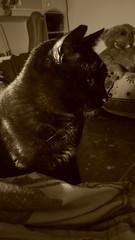 Una palla di pelo-Roma. (vedoilmondocosi) Tags: gatto nero cat black roma autunno freddo coperte asus zenfone