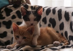 Gatos (Jose Losada Foto) Tags: gatos vayapar nikond90 nikon fotografa joselosada galicia acorua ferrol mininos cats rubiymanchi felinos miaumiau michi domesticscats