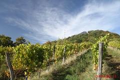 IMG_9222 (Pfluegl) Tags: wien vienna stadtwanderweg wandern wanderweg 1a sww kahlenberg leopoldsberg herbst autumn fall chpfluegl chpflgl christian pflgl pfluegl austria sterreich europa europe hikking wein wine