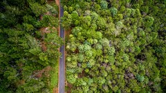 Aerial Drone Photos (spaceCityDrone) Tags: another awesome photo by one our favorite fans beardmotion keep them coming brother spacecitydrones drones drone dji inspirepro phantom4 mavicpro beautiful forest greenforest mountains