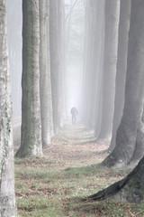 Early ride (Theo Bauhuis) Tags: laan beukenlaan mist fog mountainbike fietsen fietser biker doetinchem slangenburg