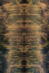 20160825_ZambeziReflectionsPortraits_MCM-4 (mcmessner) Tags: abstract africa bjadventures morning morningboatride reflection rorschak southafrica2016 sunrise tongabezilodge water zambeziriver zambia livinstone