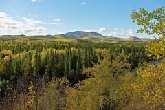 The Mountains West of Carmacks (MIKOFOX  Show Your EXIF!) Tags: canada fujifilmxt1 yukon aspen mountains fall spruce landscape xt1 september showyourexif mikofox xf18135mmf3556rlmoiswr