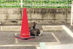 Today's Cat@2016-10-19 (masatsu) Tags: cat thebiggestgroupwithonlycats catspotting pentax mx1