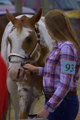 Show Time (swong95765) Tags: horse contest woman female lady cowgirl animal show