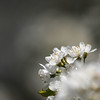 ITA (beta karel) Tags: light white flower apple nature closeup canon square spring blossom bokeh air ita intheair 2013 40d ©betakarel