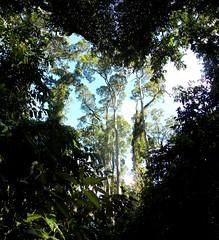 Heart of the Jungle (BlueMan.) Tags: nikon rainforest heart negativespace jungle malaysia borneo 777 sabah sepilok sandakan colourcircles setsubject nikonl810