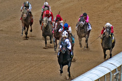 Take Charge Indy winning the Alysheba (Derby Gal) Tags: horses horse racing horseracing racehorse thoroughbred horserace racehorses horseportrait horsesports horsesrunning