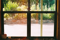 I have an obsession with windows (ballad of a teenage queen) Tags: film window 35mm garden photography bedroom adelaide olympusom10 100iso