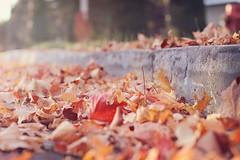 Crunchy (Jackie Rueda) Tags: street autumn fall leaves 50mm montreal wormspov jackierueda canon5dmarkiii wwwjackieruedacom