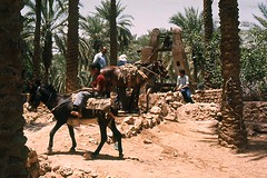 Ghardaa, Algrie (jmhau94) Tags: sahara algeria well oasis algerie irrigation noria puits afriquedunord ghardaia ghardaa