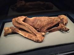 Gebelein Man (radiowood) Tags: london mummy britishmuseum predynastic gebrlein