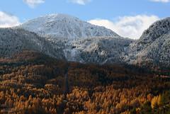 MYL_4416m (MILESI FEDERICO) Tags: italy nature montagne automne nikon italia natura piemonte neve dettagli autunno alpi montagna piedmont nevicata valsusa dettaglio nital valdisusa milesi alpicozie d7100 visitpiedmont altavallesusa altavaldisusa valliolimpiche nikond7100 milesifederico