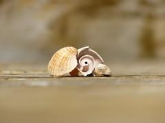 Shells on Deck (nikagnew) Tags: sun shells spiral three warm minimal depthoffield deck fibonacci simple
