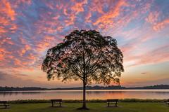 Sunset at Reservoir (BP Chua) Tags: sunset tree lone lonetree epic reservoir upperseletar seletar nature orange landscape singapore nikon d800e beautiful