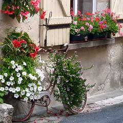Bike Flowers Pot (irecyclart) Tags: bike flower garden pots urban