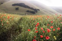italy (marcosmallred) Tags: italy italia umbria italie italien piangrande castelluccio norcia