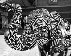 48 the beat goes on (Harry Halibut) Tags: herdofsheffield fundraiser sheffield childrens hospital charity elephant artwork littleherd fund raiser herd48160724033 thebeatgoeson tomjnewell artist sponsor crystalpeaksshopingcentreretailpark crystal peaks shopping centre 2016andrewpettigrew allrightsreserved imagesofsheffield images sheffieldarchitecture sheffieldbuildings colourbysoftwarelaziness south yorkshire publicartinsheffield public art streetart graffiti murals herd481607314033