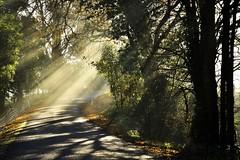 Cloverlea (phunnyfotos) Tags: phunnyfotos australia victoria vic gippsland westgippsland cloverlea morning winter mist misty fog foggy road shadow shadows sunshine nikon d750 nikond750 fence darnumallambeeroad light rays sunrays sunbeam sunbeams
