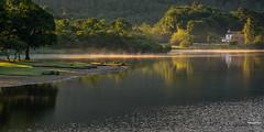 Misty mornings (tristantinn) Tags: lakedistrict keswick derwent water lake still morning mist golden tree reflection house green summer calm uk england landscape nature