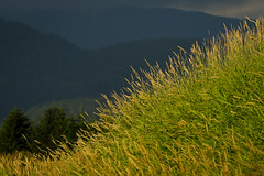 Pitt Meadows BC (Ian Threlkeld) Tags: d750 nikon mynikonlife nikonphoto nikonphotography britishcolumbia beautifulbc pittmeadows pittmeadowsdykes alouetteriver nature landscape canadianlandscapes scenery irt bc pnw westcoast flickr explore explorebc
