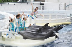 Homo sapiens and Tursiops truncatus --  Bottlenose Dolphins with trainers 4519 (2) (Tangled Bank) Tags: japan japanese asia asian kyoto city acquarium homo sapiens tursiops truncatus bottlenose dolphins with trainers 4523 2 aquarium