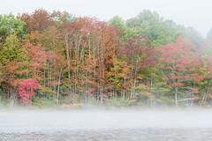 Misty Kinsac Lake (laszlofromhalifax) Tags: fallriver fall kinsaclake novascotia canada hrm mist fog lake water trees tree
