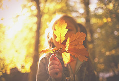 Av in autumn (DannyBradley) Tags: explored explore autumn light flickr vsco