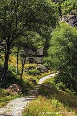 Salendo in Valle Antrona, Piemonte (filippi antonio) Tags: valleantrona antrona piemonte italiy italia montagna mountain alpi nature sentiero itinerari trekking trip tourism paesaggialpini paesaggio landscape trees