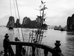 Halong Bay (jc.mendo) Tags: asia descendente dragn landscape paisaje vietnam baha jcmendo olympus halong bay blanco white negro black bn bw ngc