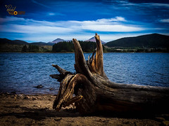 The Dead Tree at The Bay (Randall ]|[ Photography) Tags: frisco 5s colorado gibersonbay us usa unitedstate amazing bay beautiful blue brown camera cloud clouds coast day dead iphone lake landscape light mobile mountain mountains nice old outdoor peace peaceful phone photo pic picture sand sea seaside shore sky tree trees water waterscape unitedstates