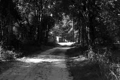 Down the road (f.tyrrell717) Tags: whit bogs nj road town agreculter