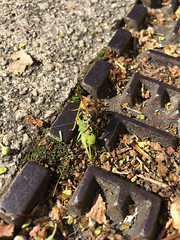 lunching (looper23) Tags: hayes kent grasshopper wasp hornet october london 2016