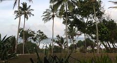 IMG_0109 (H Sinica) Tags: srilanka  ceylon  kosgoda turtle farm hatchery