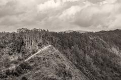 _DSC3243-Gunung-Lanang5-web (jazzmatezz) Tags: 2016 gununglanang indonesia kulon progo yogjakarta wonosobo jawatengah centraljava middenjava indonesie dutchcolony cloudyday steep curam stijl lines trees selfispot